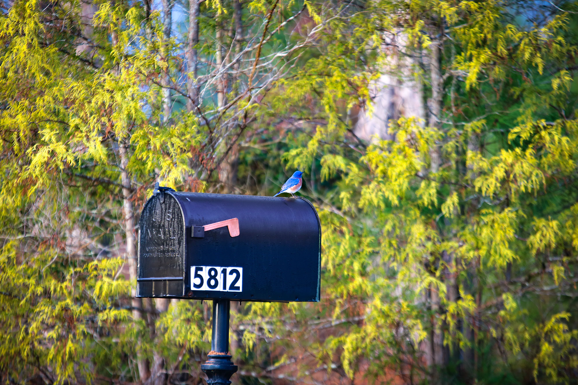 bluebird-considering-new-home-at-savannah-lakes